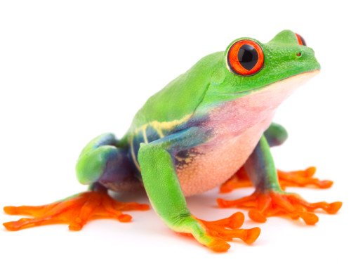 Why Auto-enrolment pensions are a bit like boiling a frog!